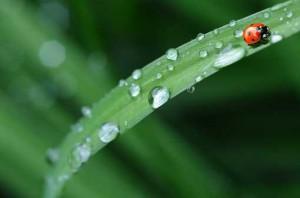 510_ladybug-574971_960_720
