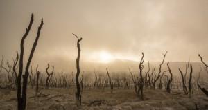 dead-trees-947331_1920-770x410